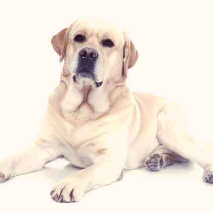 10 Most Amazing Facts About Dogs