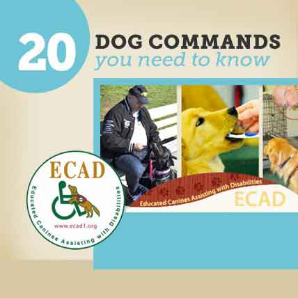 20 Dog Commands You Need to Know
