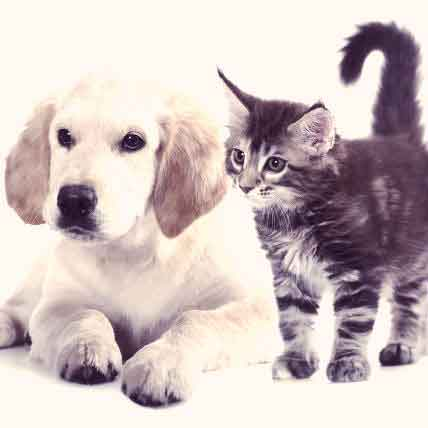 8 Top Pet Health Questions Answered
