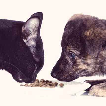 Ash in Pet Food: Filler or Nutrient?