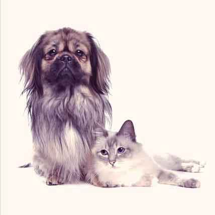 Asthma in Cats and Dogs - Causes and Concerns
