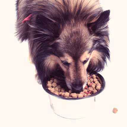 The Best Male Dog Nutrition
