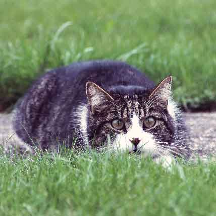 Crack the Cat Language Barrier: Learn to Understand Your Cat