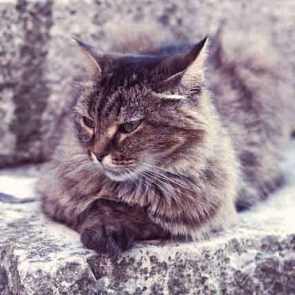 The Average Lifespan of a Cat: Breed by Breed Chart