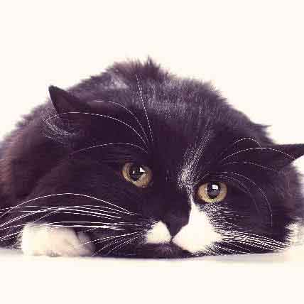 Cat Depression Treatments - What Are Your Options?