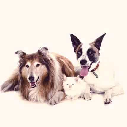Urinary Tract Infection in Dogs and Cats