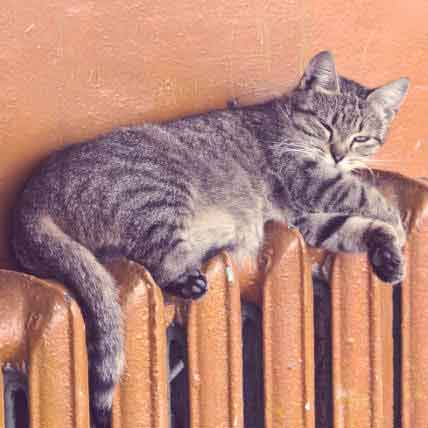 High Blood Pressure in Cats & What To Do About It
