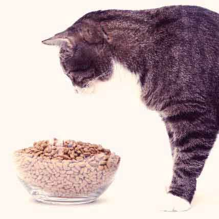 Cat Nutrition for Male Cats