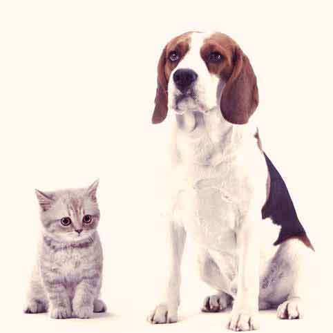 Can Cats Take Flea and Tick Medication for Dogs?