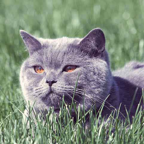 Causes of Allergies in Dogs and Cats