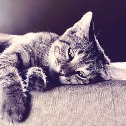 The Causes And Symptoms Of Pancreatitis In Cats