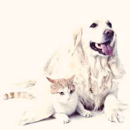 Supplements to Improve Joint Health for Dogs and Cats