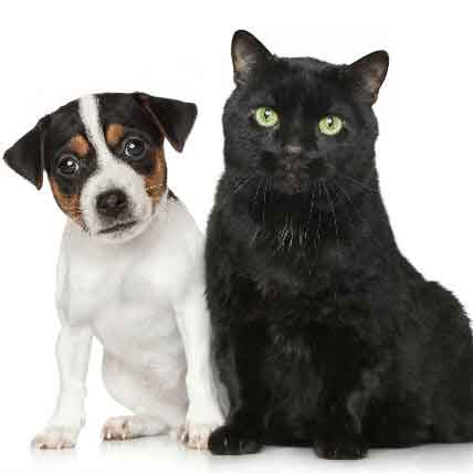 Contact Dermatitis In Dogs And Cats