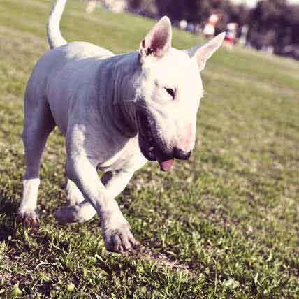 Coping with Coprophagia in Your Dog