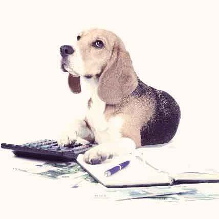 Budgeting for the Cost of a Dog