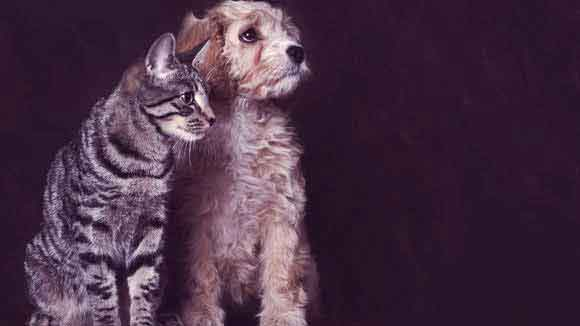 Dandruff and Flaky Skin in Dogs and Cats