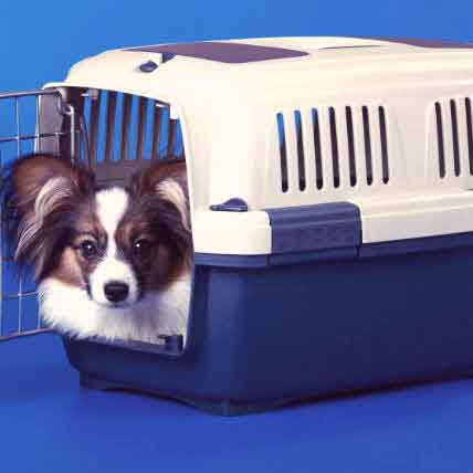 Does Your Dog Hate Their Crate? Get Them to Love It Instead