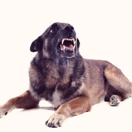 How We Misunderstand Dog Aggression
