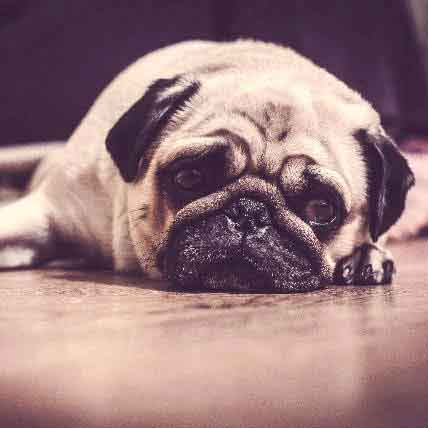 3 of the Most Effective Dog Depression Treatments