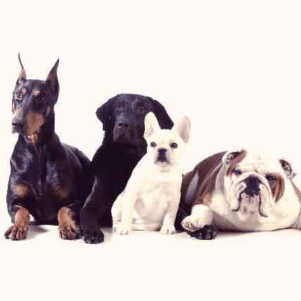 List of Dog Breeds and Their Common Health Concerns