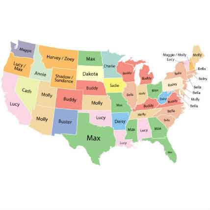 Most Popular Dog Names: A State by State Animation