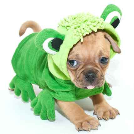 dog in a frog costume
