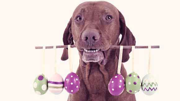 Easter Tips for You and Your Pet