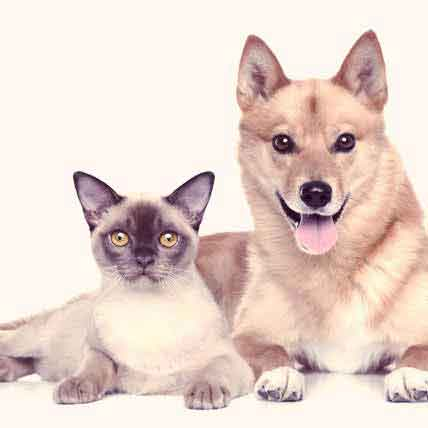 Food for Liver Disease in Dogs and Cats