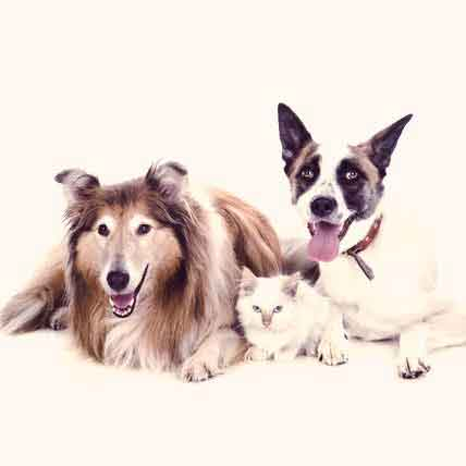 Food to Treat Bad Breath in Cats and Dogs