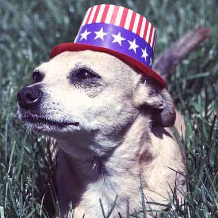 4th of July Safety Kit for Your Pets