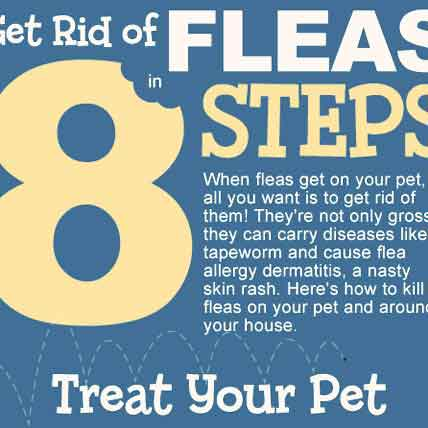 Get Rid of Fleas in 8 Steps - Infographic