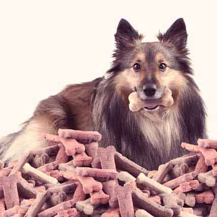 Healthy Food for a Healthy Sheltie