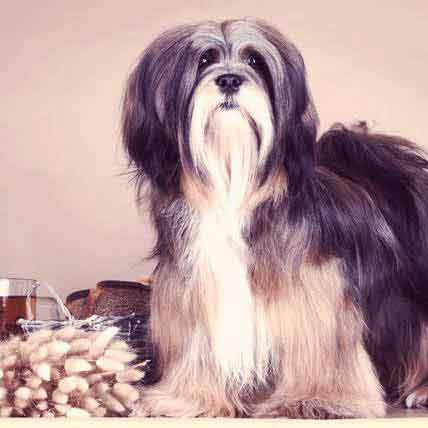 Homemade Baked Dry Dog Food for a Lhasa Apso