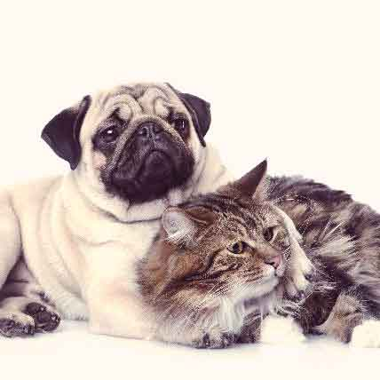 How to Treat Stenotic Nares in Cats and Dogs