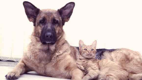 A Dog And Cat Laying Together