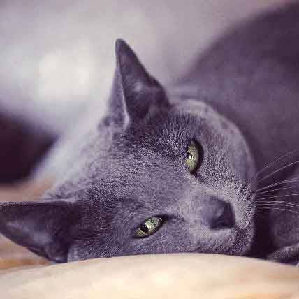 Irritable Bowel Syndrome In Cats