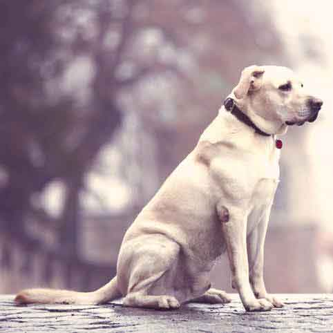 Canine and Feline CRF: Kidney Failure in Pets