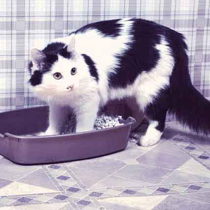 Litter Box Training for Your Cat