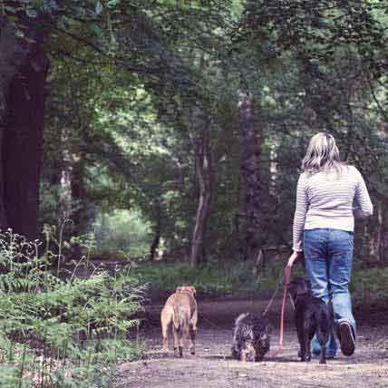 Lyme Disease in Dogs and Cats