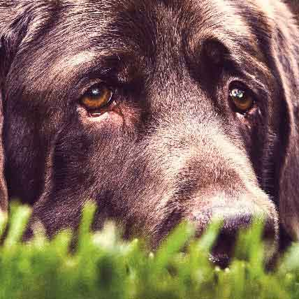 The Basics of Nuclear Sclerosis in Dogs