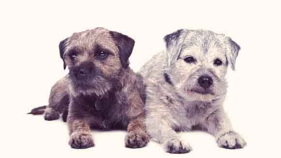 Aging and Old Dog Behaviors