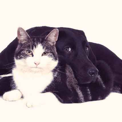 Pancreatic Insufficiency In Dogs And Cats