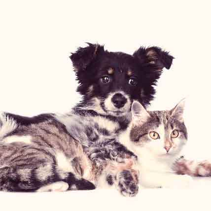 "Panosteitis In Dogs And Cats: The ""Growing Pains"" Condition"