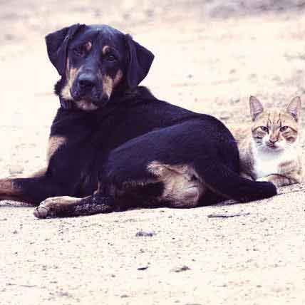 Parasites and Worms in Dogs and Cats