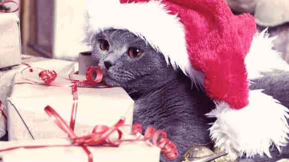 A Cat Wearing A Santa Hat Laying on Christmas Gifts