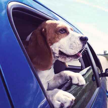 Road Trip with a Dog Checklist