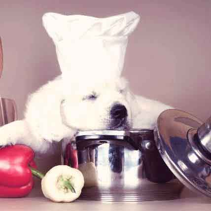 8 Super Premium Dog Foods