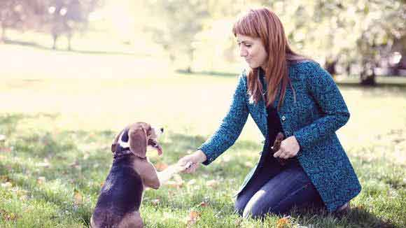 Products to Improve Your Dog Training