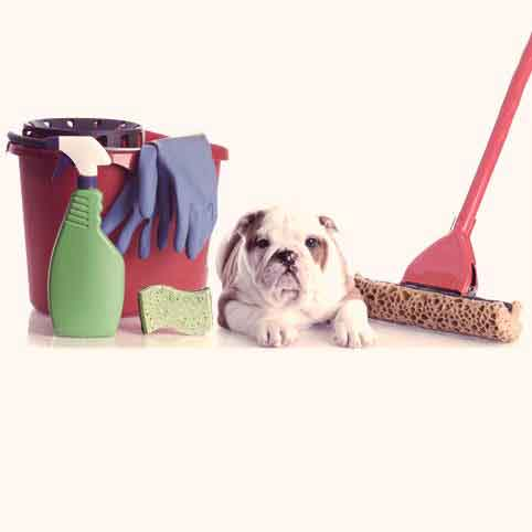 Pet Safety and Household Cleaning Products
