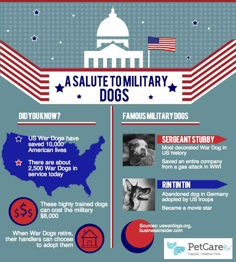 Salute-to-Military-Dogs-Infographic